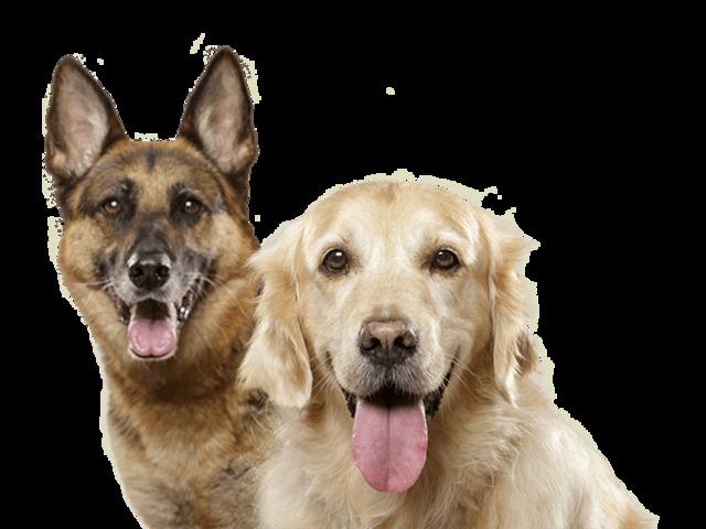 Prenditi cura del pelo e delle articolazioni del tuo cane!