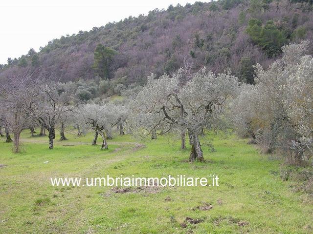 Rif. 107 casale panoramico a Altrocanto di Narni - 7
