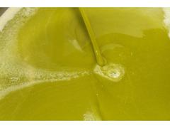 Olio Extravergine di Oliva Nocellara del Belice di Castelvetrano 100% Siciliano