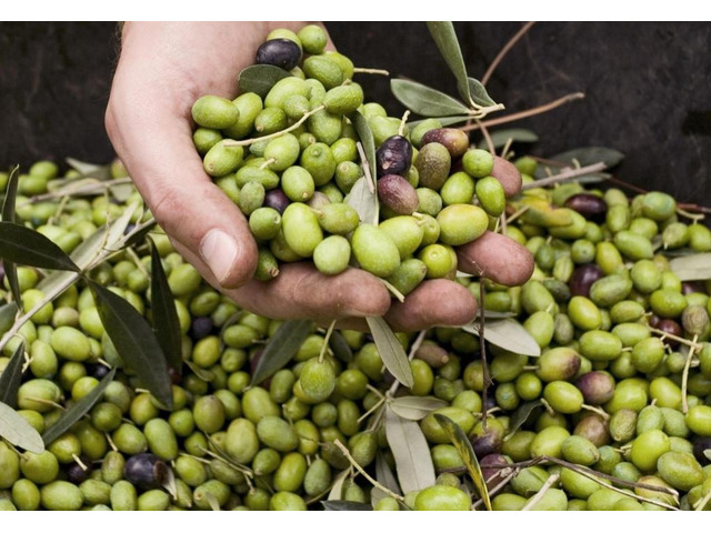 Olio Extravergine d'oliva - 4