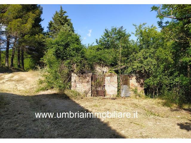 Rif. 108 casale con 4 ettari in Avigliano Umbro - 6
