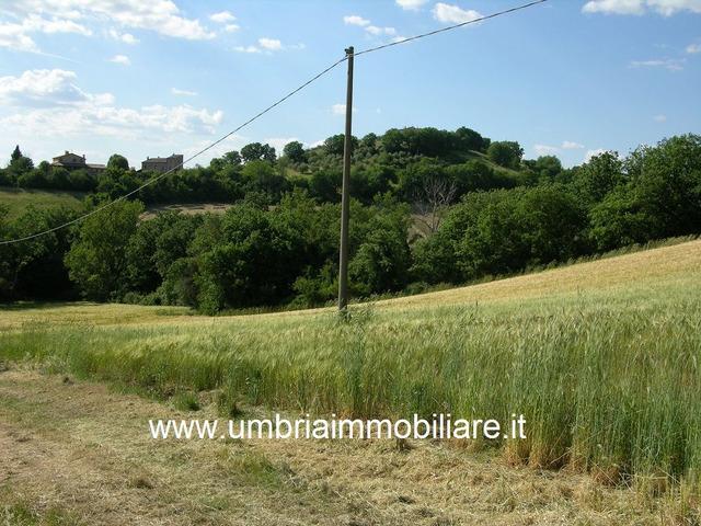 Rif. 108 casale con 4 ettari in Avigliano Umbro - 9