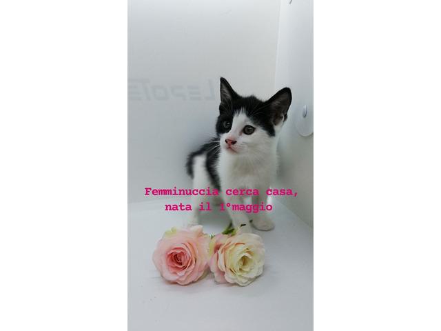Gattini cercano casa - 2