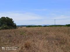 Pressi Santa Maria La Palma terreno agricolo Ha 19