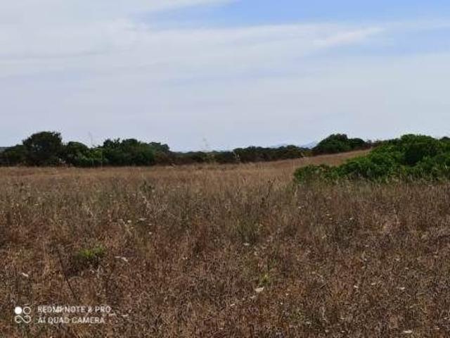 Pressi Santa Maria La Palma terreno agricolo Ha 19 - 2