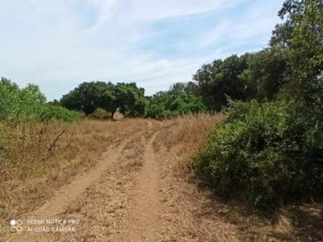 Pressi Santa Maria La Palma terreno agricolo Ha 19 - 4