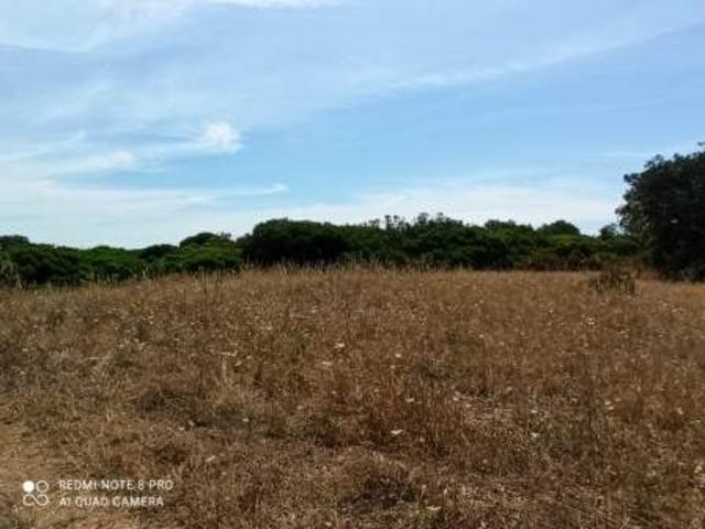 Pressi Santa Maria La Palma terreno agricolo Ha 19 - 5