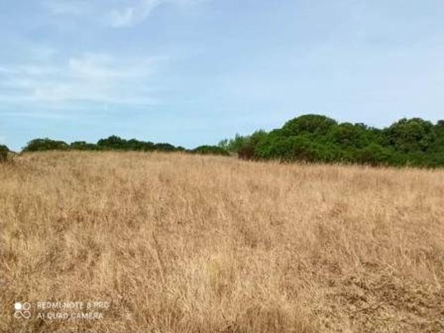 Pressi Santa Maria La Palma terreno agricolo Ha 19 - 6
