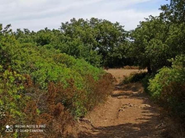 Pressi Santa Maria La Palma terreno agricolo Ha 19 - 8