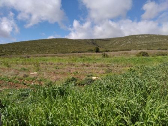 Alghero agro terreno agricolo Ha 43 !!! - 8