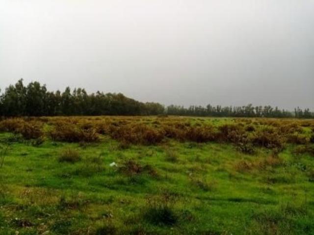 Alghero agro terreno agricolo Mq 65.000 !!! - 5