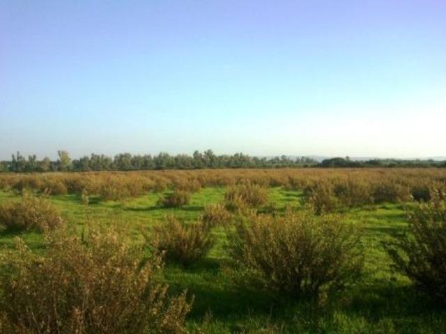 Alghero agro terreno agricolo Mq 65.000 !!! - 8