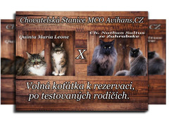 Cattery MCO Avihans, CZ