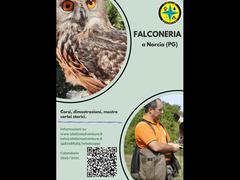 Corso di falconeria 26-27 settembre 2021