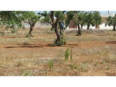 TERRENO AGRICOLO - 2