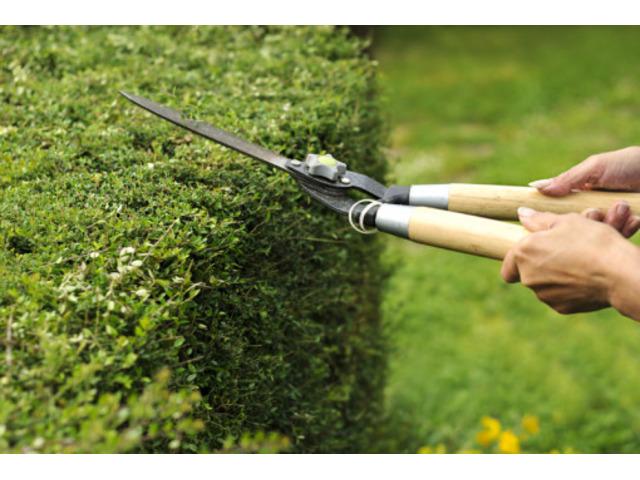 Servizio di Giardinaggio - 2