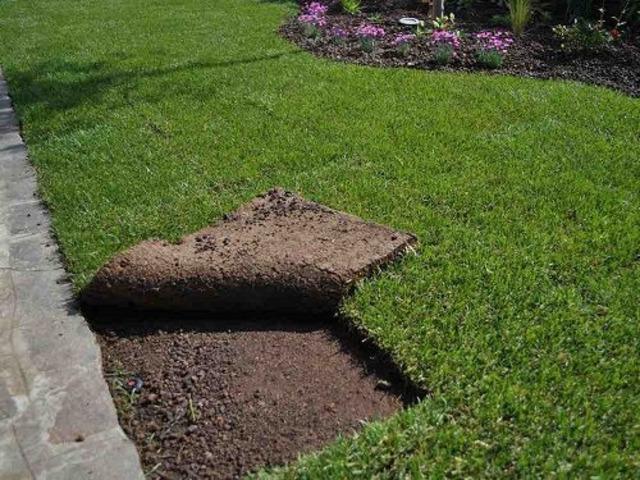 Servizio di Giardinaggio - 5