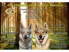 Czechoslovakian wolfdog reservation for puppies
