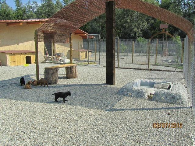 PENSIONE HOTEL DOGSITTER CATSITTER ALLEVAMENTO PER CANI E GATTI - 3