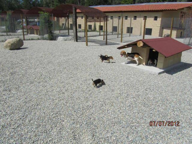 PENSIONE HOTEL DOGSITTER CATSITTER ALLEVAMENTO PER CANI E GATTI - 4
