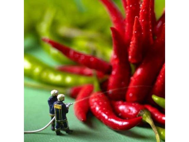 In Calabria è tempo di peperoncino fresco.