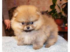 Dog Sitter Venezia - Mestre